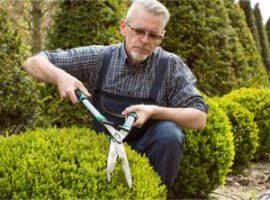Amenajari gradini Bucuresti - amenajarea si intretinerea gradinii si spatiilor verzi, insamantare si plantare rulouri de gazon, sisteme de irigatii
